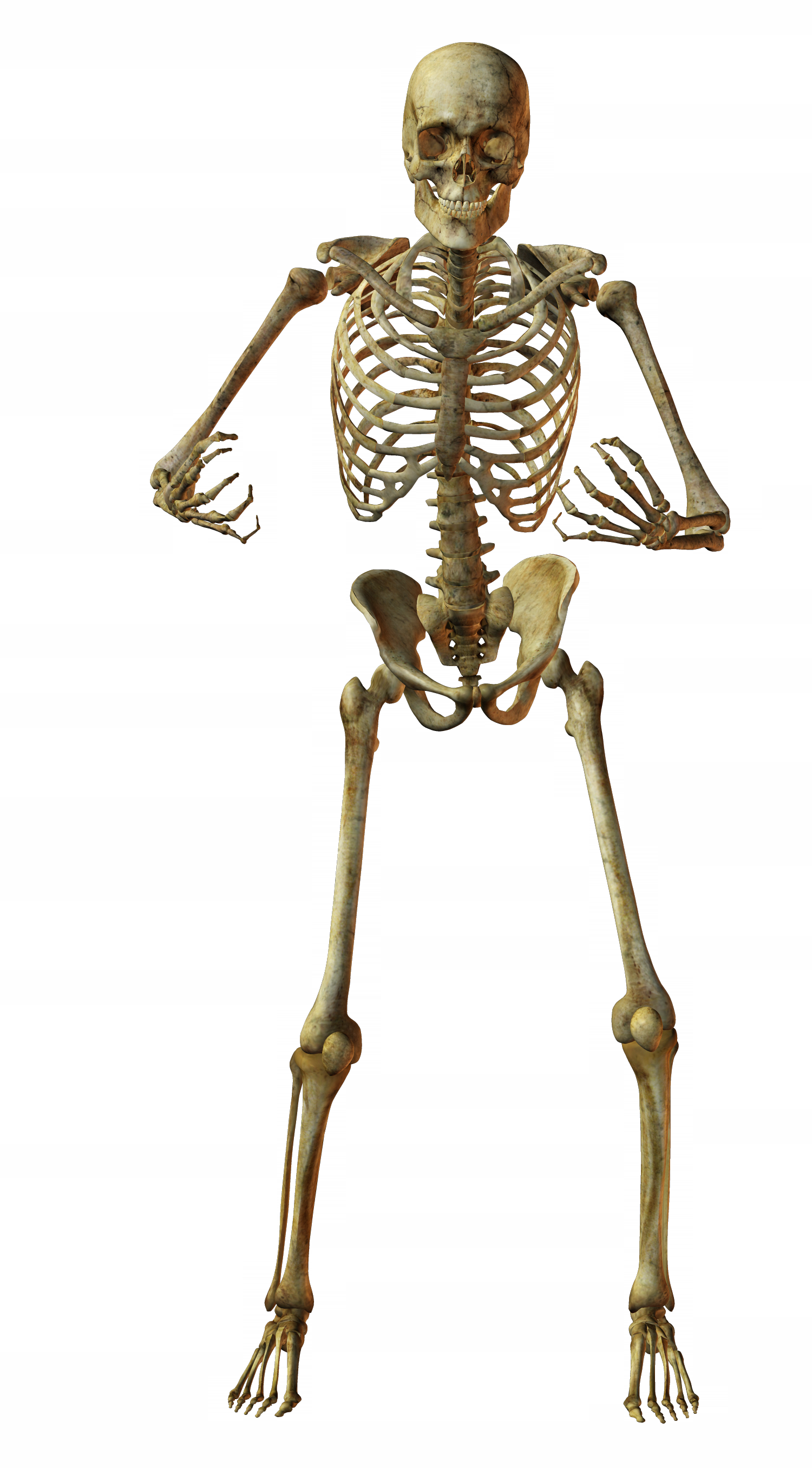 skeleton04.png